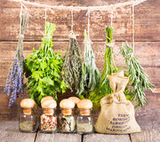 Various fresh and dried herbs Stock Images