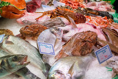 Various fresh fish (Dorade - Gilt-head bream, Calamarcitos - squid), crayfish and lobsters on ice. With price tags at the Boqueria market, Barcelona, Catalonia Stock Image