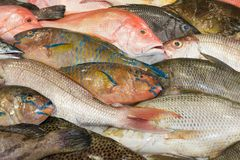 Various fresh fish at a fish market Stock Photo