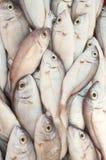 Various fresh fish and seafood at the fish market Stock Image