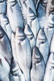 Various fresh fish and seafood at the fish market Stock Images