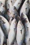 Various fresh fish and seafood at the fish market Royalty Free Stock Images