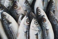 Various fresh fish and seafood at the fish market Royalty Free Stock Image