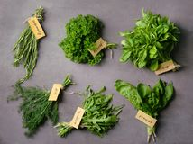 Various fresh herbs. On dark background stock photo