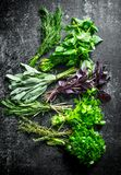 Various fresh herbs from the garden. On dark rustic background royalty free stock photo