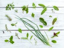 Various fresh herbs from the garden holy basil flower, basil flo Royalty Free Stock Image
