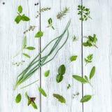 Various fresh herbs from the garden holy basil flower, basil flo Stock Photography