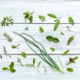 Various fresh herbs from the garden holy basil flower, basil flo Royalty Free Stock Photo
