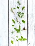 Various fresh herbs from the garden holy basil flower, basil flo Stock Photos