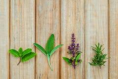 Various fresh herbs from the garden holy basil flower, basil flo Stock Images