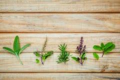 Various fresh herbs from the garden holy basil flower, basil flo Stock Image