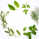 Various fresh herbs from the garden peppermint , sweet basil ,rosemary,oregano, sage and lemon thyme on white wooden background w. Ith flat lay and copy space royalty free stock images