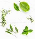 Various fresh herbs from the garden peppermint , sweet basil ,rosemary,oregano, sage and lemon thyme on white wooden background w. Ith flat lay and copy space stock photo