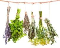 Various fresh herbs hanging Stock Image