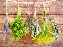Various fresh herbs hanging Stock Images