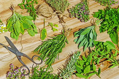 Various fresh herbs royalty free stock image