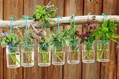 Various fresh herbs Stock Image