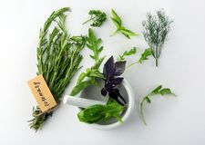 Various fresh herbs. On white background royalty free stock images