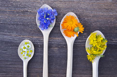 Various fresh medical herbs bloosoms in wooden spoons Stock Photos