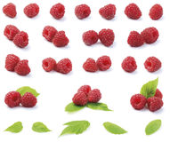 Various fresh raspberries. Various fresh organic garden raspberries with green leaf isolated on white background stock photos