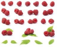 Various fresh raspberries Stock Photos
