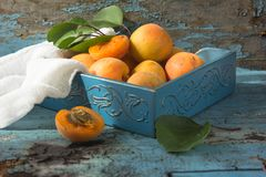 Various Fresh ripe apricots on wooden surface leaves fruits apricots on board cut apricots in half. Light blue rustic wood backgro. Fresh ripe apricots on wooden Stock Photos