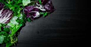 Various fresh salad leaves with lettuce, radicchio, and rocket on dark wooden background with copy space. Top view Royalty Free Stock Photography