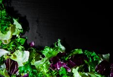 Various fresh salad leaves with lettuce, radicchio, and rocket on dark wooden background with copy space. Top view Royalty Free Stock Images