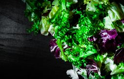Various fresh salad leaves with lettuce, radicchio, and rocket on dark wooden background with copy space. Top view Royalty Free Stock Photo