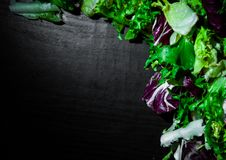 Various fresh salad leaves with lettuce, radicchio, and rocket on dark wooden background with copy space. Top view Stock Photos