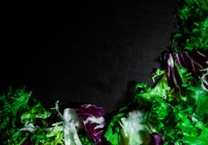 Various fresh salad leaves with lettuce, radicchio, and rocket on dark wooden background with copy space. Top view Royalty Free Stock Image