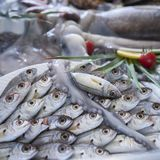 Various fresh seafood and fishes in fish market stock photo