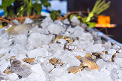 Various fresh seafood on ice exposition at the outdoor restaurant Stock Image