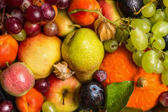 Various fresh sharvest fruits , top view. Various fresh sharvest fruits top view royalty free stock photo