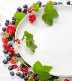 Various fresh summer berries Stock Images