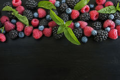 Various fresh summer berries isolated on black background. Ripe blueberry, raspberry and blackberry with basil leaves. Berries at border of image with copy Stock Images