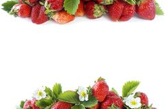 Various fresh summer fruits. Ripe strawberries on white background. Strawberries at border of image with copy space for text. Background berries Stock Photos