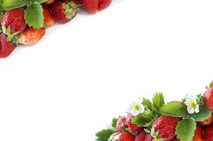 Various fresh summer fruits. Ripe strawberries on white background. Strawberries with copy space for text. Background berries Royalty Free Stock Image