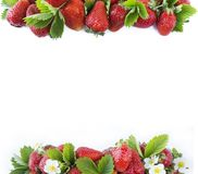 Various fresh summer fruits. Ripe strawberries on white background. Top view. Strawberries at border of image with copy space foou. Various fresh summer fruits Stock Photos