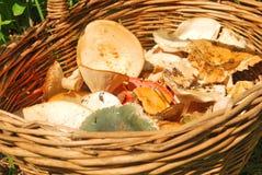Various fresh summer mushroom Royalty Free Stock Images