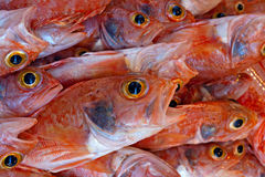 Various freshly caught fish on sale Royalty Free Stock Photography