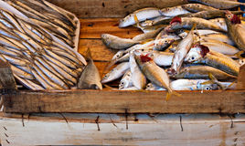Various freshly caught fish on sale Stock Photos