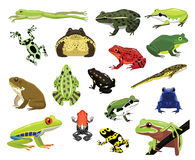 Various Frogs Cartoon Vector Illustration Royalty Free Stock Photos