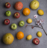 Various fruits with almond flowers, gray background Royalty Free Stock Photography