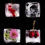 Various fruits and flower into ice cubes Royalty Free Stock Photography