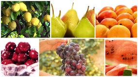 Various fruits and fruit trees collage. Montage including diverse fruits and fruit trees stock video
