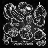 Various fruits set vintage linear style. Stock Images