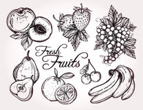 Various fruits set vintage linear style. Stock Photography