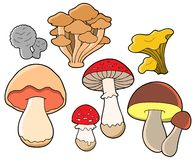 Various fungi collection Stock Photo