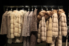 Various fur coats Stock Photos